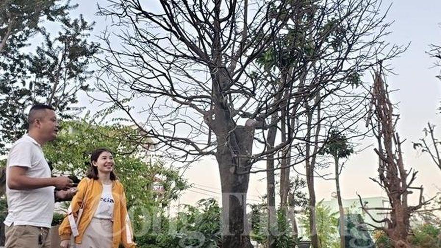 Đà Nẵng: Dịch vụ cho thuê mai vào mùa