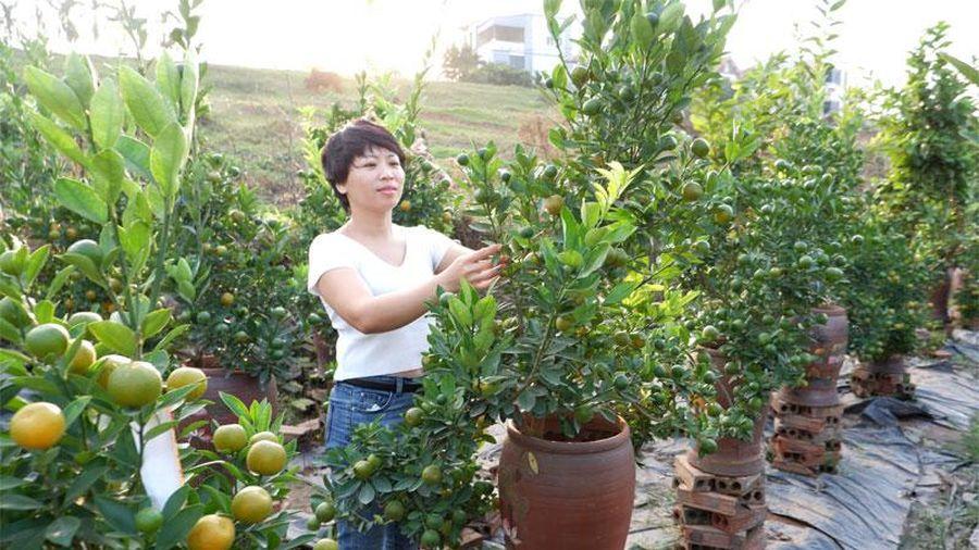 Ghi nhận tại Văn Khê (Mê Linh): Giá hoa hồng và cây cảnh đắt từ vùng trồng