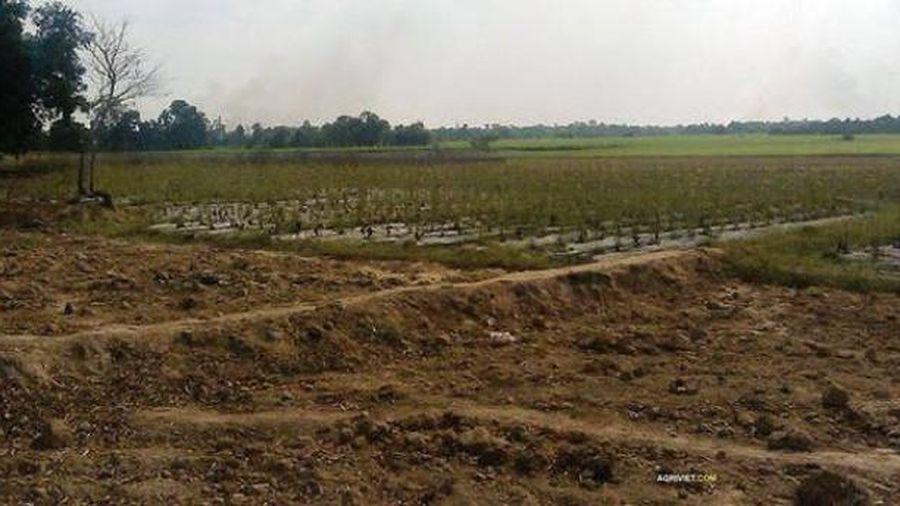 Chuyển mục đích sử dụng đất tại tỉnh Thanh Hóa