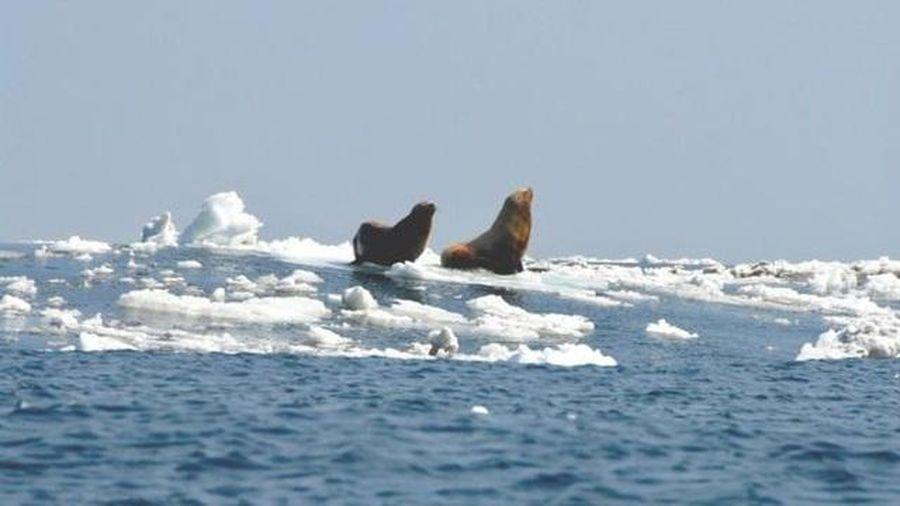 Sông băng 15.000 năm tuổi tan có thể gây nguy cơ giải phóng 33 nhóm virus cổ xưa bị mắc kẹt