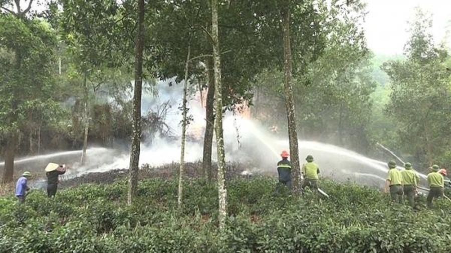 Hà Nội: Chủ động phòng cháy, chữa cháy rừng dịp Tết và lễ hội đầu năm 2020
