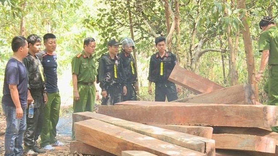 Để rừng tan hoang, 4 cán bộ công ty lâm nghiệp bị bắt