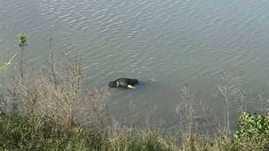 Đi câu cá, phát hiện thi thể nam giới trôi trên sông Ly Ly