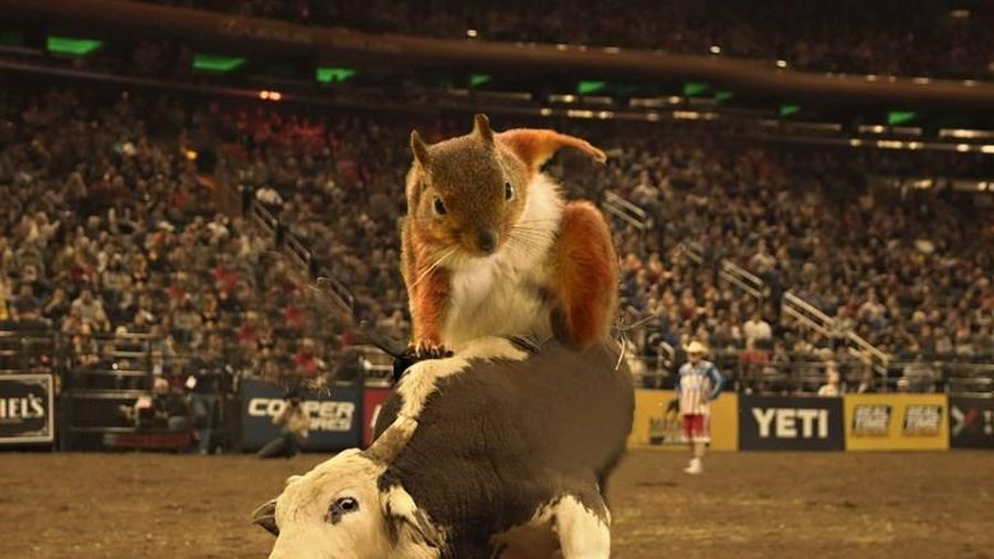 Có thể bạn chưa biết: Những chú sóc bản chất là các siêu anh hùng trong tự nhiên