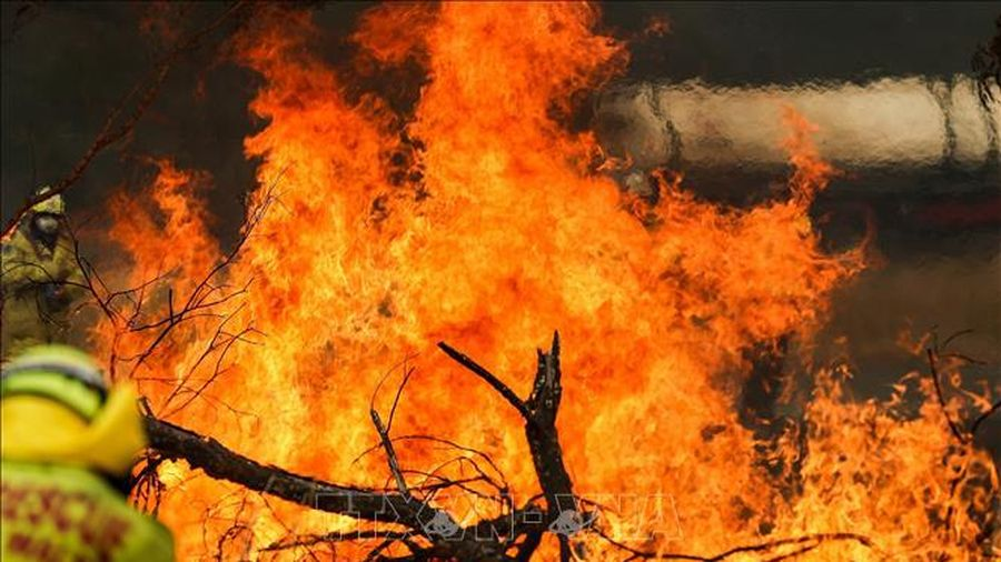 Cháy rừng tại Australia: Nhật Bản điều 2 máy bay vận tải và 70 quân nhân tới hỗ trợ