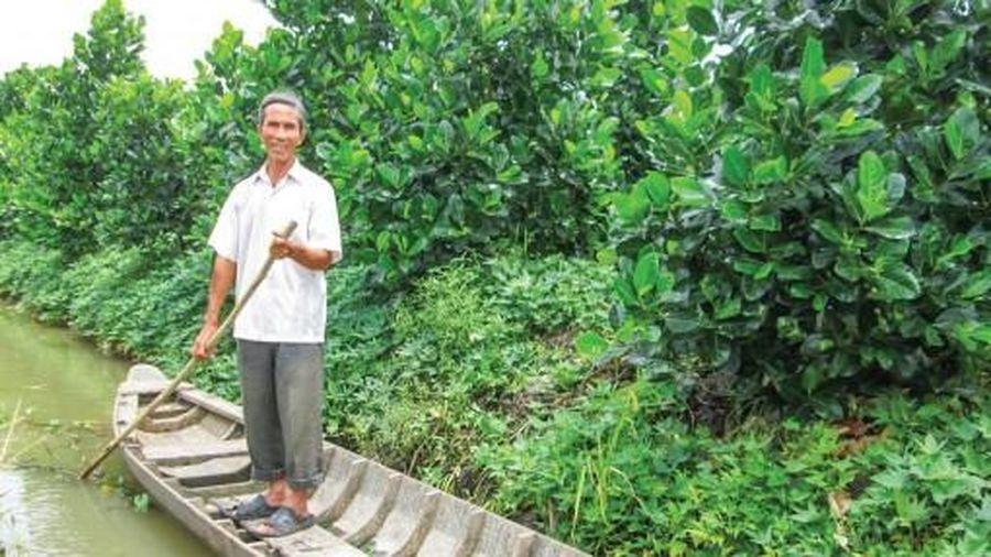 Trồng mít Thái kết hợp nuôi cá cho thu nhập cao
