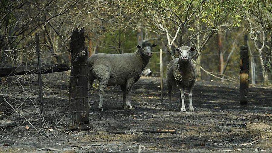 Australia tăng gấp đôi các khoản hỗ trợ nạn nhân cháy rừng