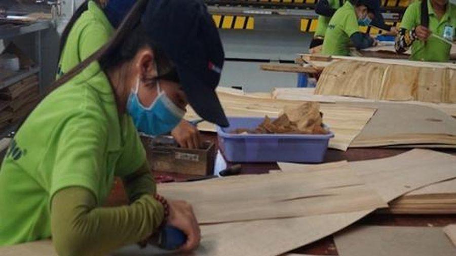 Thương nhân xuất khẩu gỗ dán sang Mỹ sẽ phải khai báo tự nguyện năng lực sản xuất