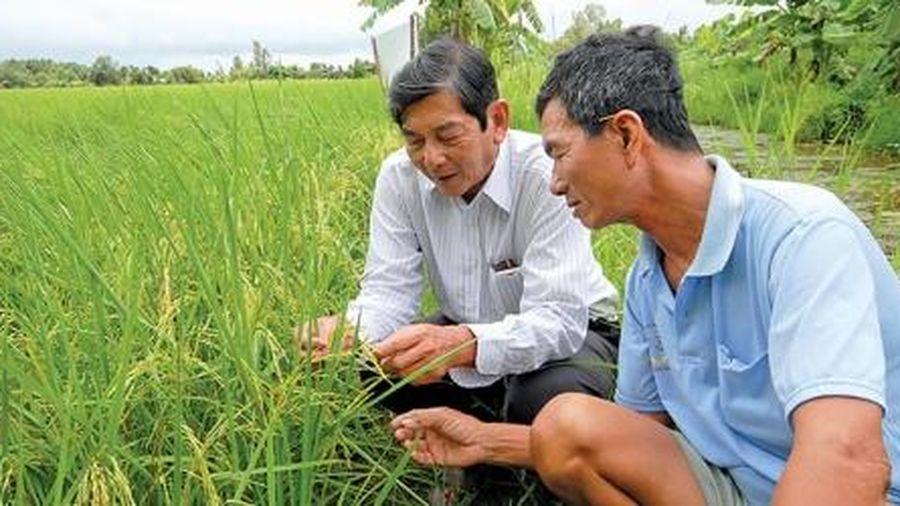 Người chắp cánh hạt gạo Việt Nam vươn tầm thế giới