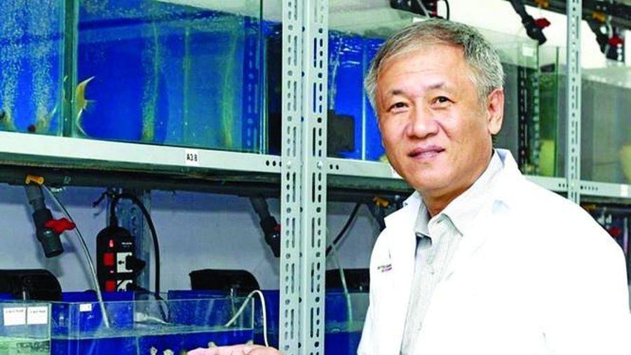 Vị tiến sĩ Việt kiều và chuyện 'chặt cầu qua sông'