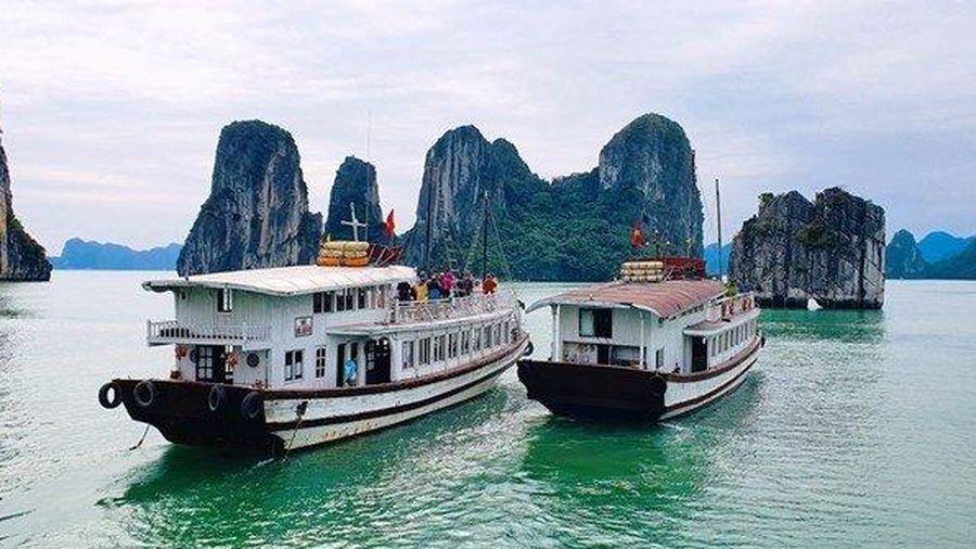 Hơn năm vạn du khách tham quan Vịnh Hạ Long dịp Tết Canh Tý
