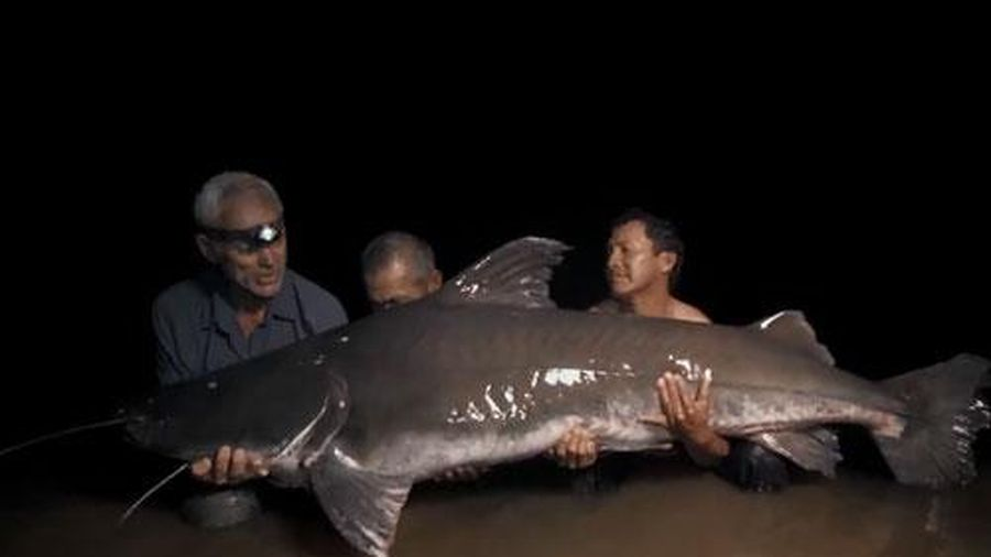 Cần thủ Anh tóm gọn cá trê khổng lồ, nặng hơn 100kg
