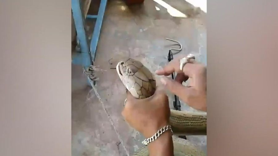 Bắt rắn hổ mang chúa dài gần 4 m ở Thái Lan