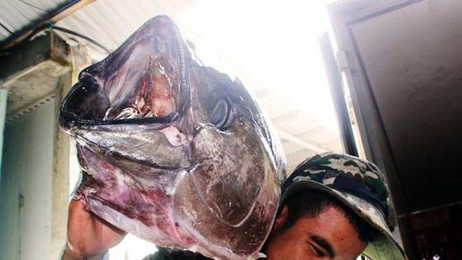 Nỗ lực tái thiết một nghề cá bền vững