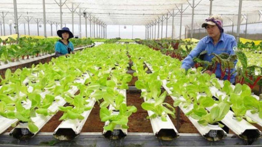 Khoa học công nghệ giúp gia tăng 30% giá trị sản xuất nông nghiệp