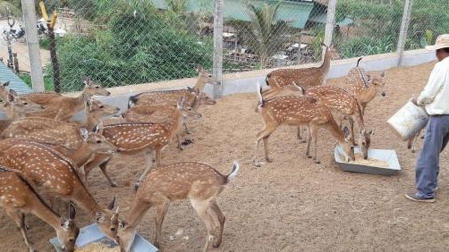 Gia Lai: Quản lý nghiêm động vật hoang dã