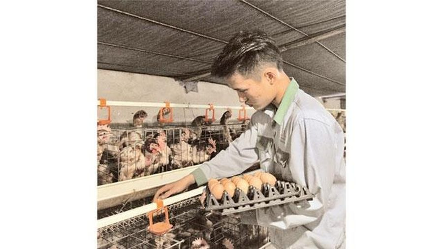 Bảo đảm nguồn hàng nông sản cho thị trường