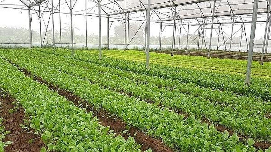 Hà Nội: Tập trung phát triển các mô hình sản xuất nông nghiệp hiệu quả cao