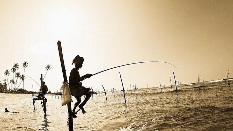 Ấn tượng và độc đáo khi dùng cà kheo câu cá, của ngư dân quốc đảo Sri Lanka