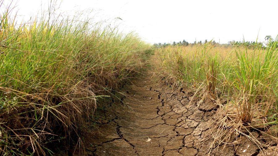 Long An: Người dân lao đao trong mùa hạn mặn gay gắt