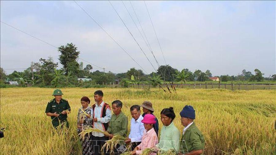 45 năm giải phóng tỉnh Gia Lai: Đổi thay ở xã vùng biên anh hùng