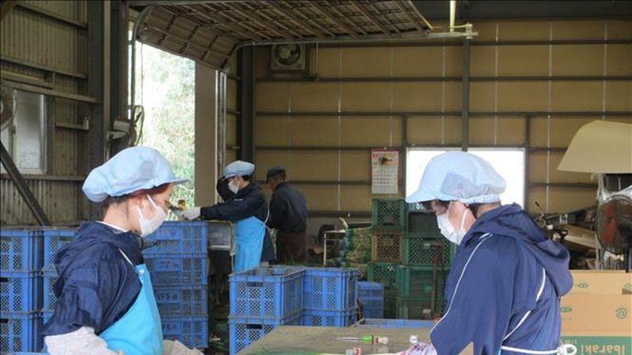 Thực tập sinh nước ngoài tại Nhật Bản được gia hạn lưu trú vì dịch COVID-19