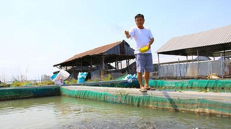 Đồng Tháp: Kiếm tiền tỷ từ nuôi cá chép giòn