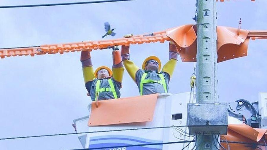 Điện lực Bình Dương: Đảm bảo cung ứng đủ điện cho phát triển kinh tế, xã hội mùa khô