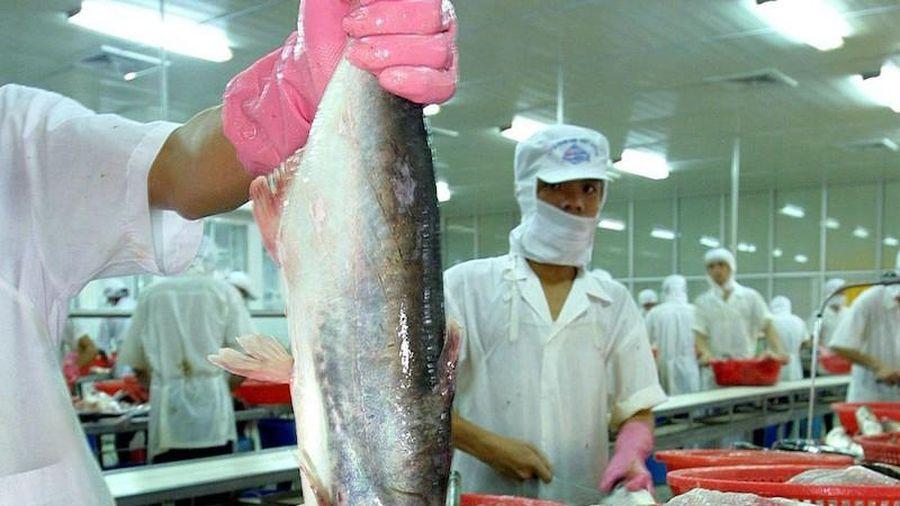 Cá tra Việt tìm đường vượt dịch COVID-19