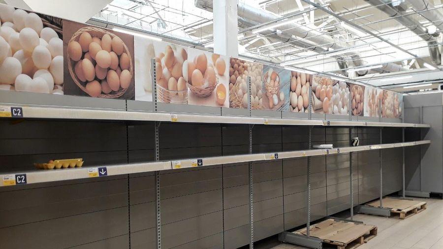 Giá trứng gà tăng 300% tại Mỹ