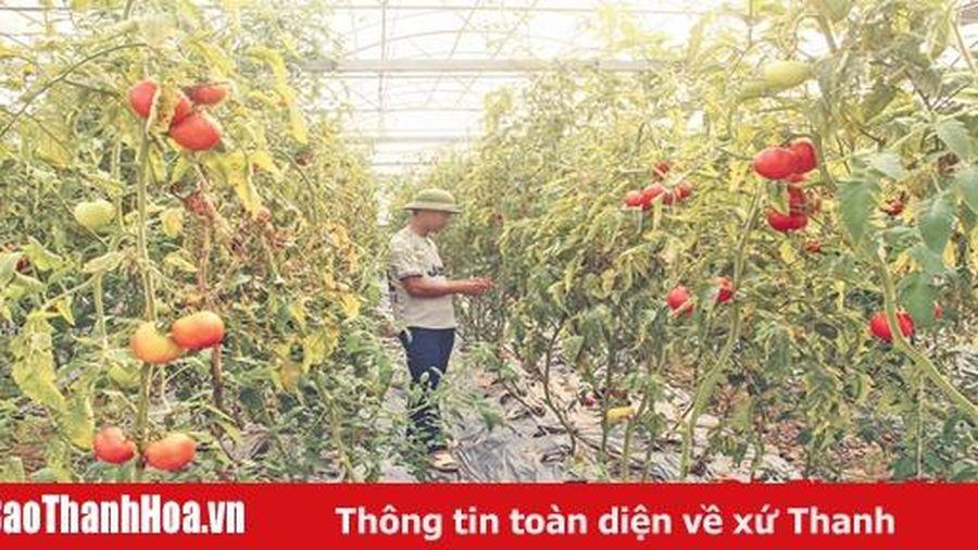 Toàn tỉnh có 1.127 doanh nghiệp đầu tư vào nông nghiệp