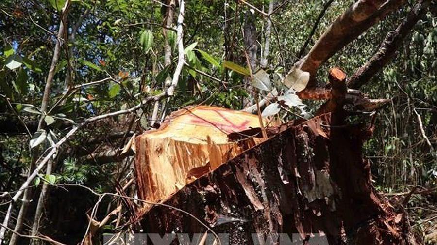 Thực hiện đóng cửa rừng tự nhiên: Bài 3 - Giải bài toán giữ rừng ...