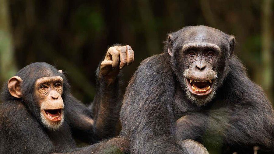 Động vật 'nói' với nhau như thế nào