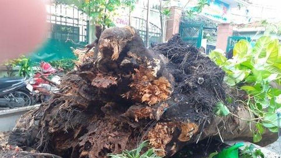 Cổng trường đóng, che bạt sau vụ học sinh tử vong do cây phượng đổ