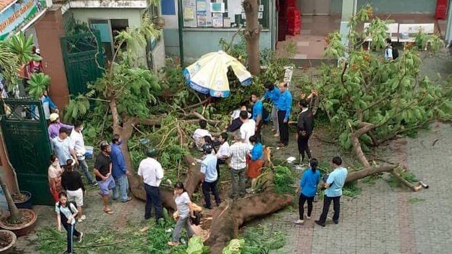 Phụ huynh kéo đến trường sau vụ cây bật gốc đè nhiều học sinh ở TP.HCM