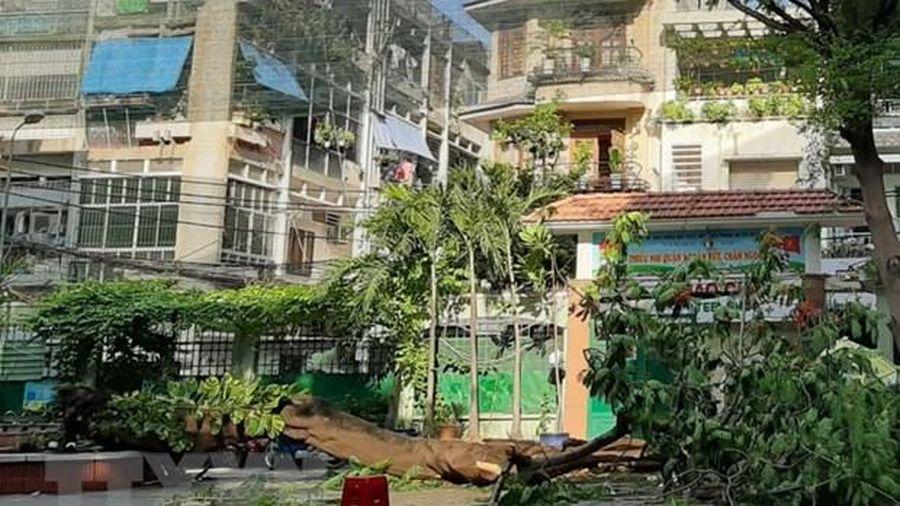 Công an vào cuộc điều tra vụ cây phượng đổ đè chết học sinh