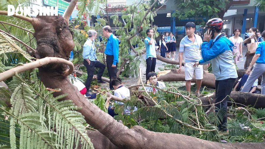 Thông tin mới nhất vụ cây phượng đổ khiến nhiều học sinh bị thương