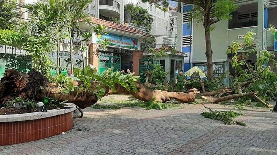 Vụ cây đổ trong trường học ở TP Hồ Chí Minh: Một học sinh tử vong