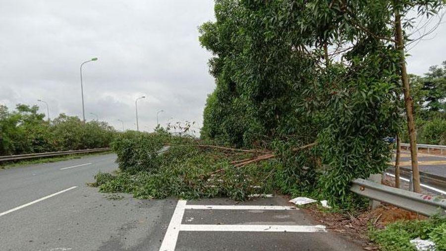 Hà Nội: Gần 80 cây xanh gãy, đổ do mưa dông đêm 25-5