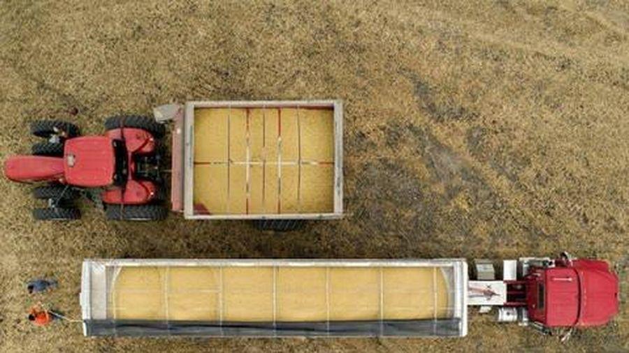 Trung Quốc ngưng mua hàng nông sản Mỹ giữa căng thẳng
