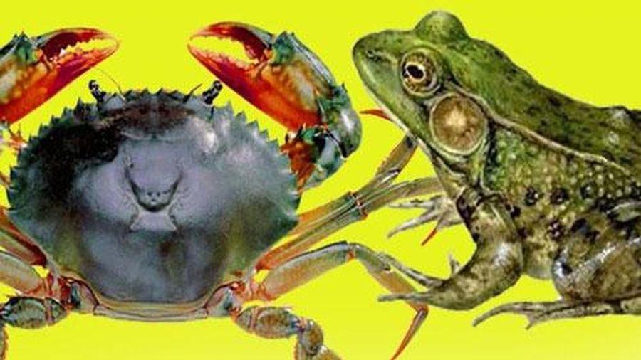 Thế giới kỳ thú: Những con vật nào kỵ nhau?