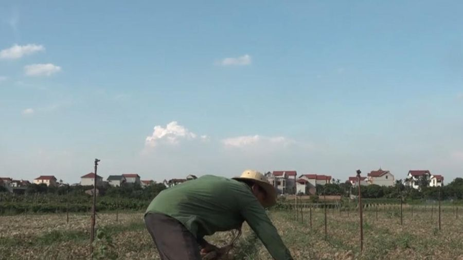 Hai nông dân đầu tiên bị phạt vì dùng thuốc bảo vệ thực vật lậu