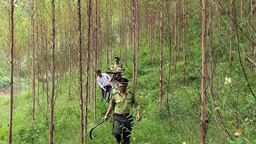 Gắn dịch vụ môi trường rừng với bảo vệ rừng hiệu quả