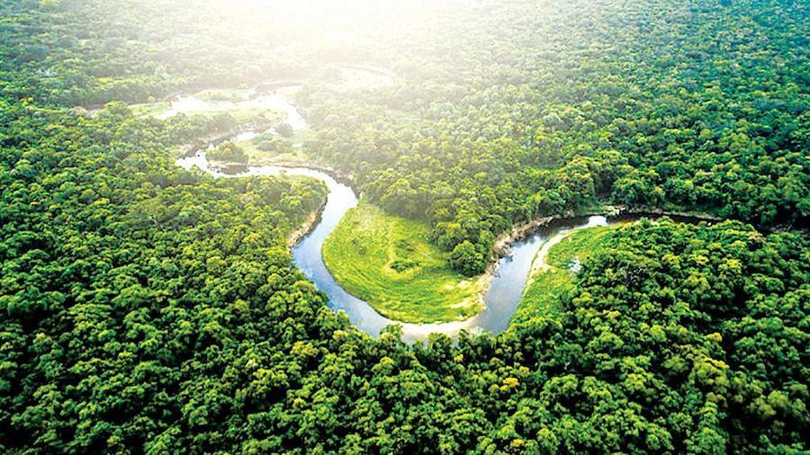 Truy tố hơn 2.200 đối tượng phá rừng Amazon