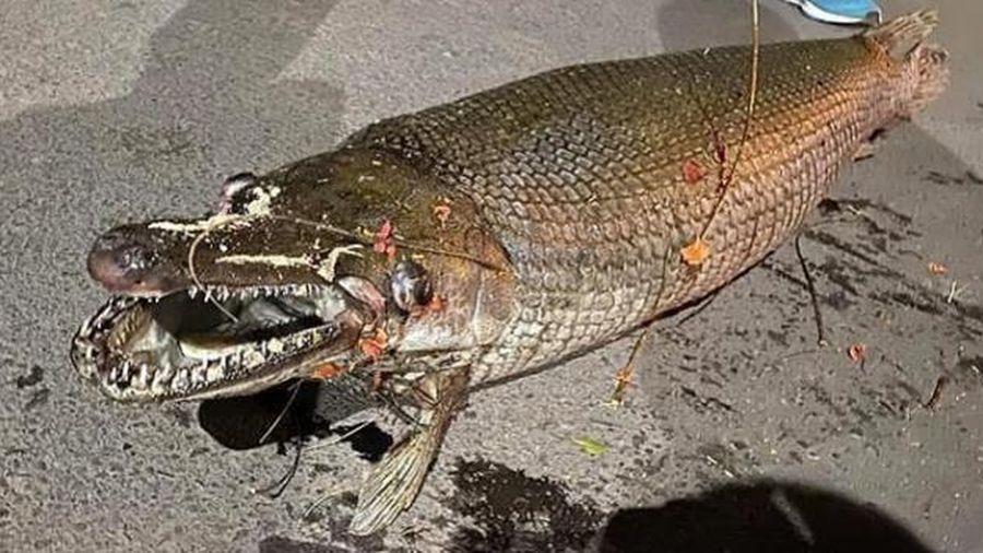Hà Nội: Phát hiện xác cá sấu hỏa tiễn trong Công viên Thống Nhất