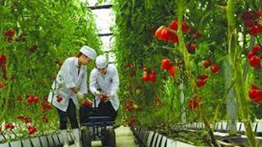 Huy động vốn cho phát triển nông nghiệp công nghệ cao trên địa bàn huyện Vụ Bản, tỉnh Nam Định