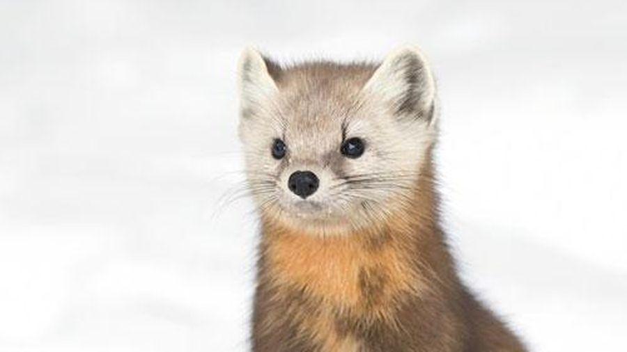 11 loài động vật đáng yêu bậc nhất thế giới