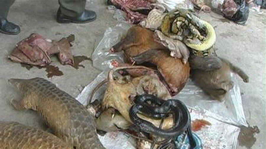Cảnh báo ¾ bệnh truyền nhiễm ở người có nguồn gốc từ động vật