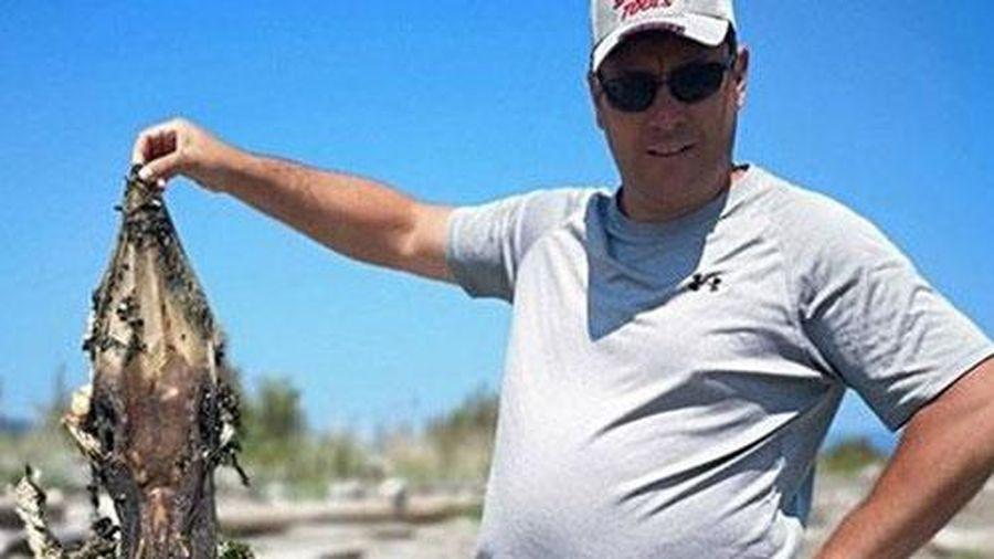 'Quái vật' đầu cá sấu, đuôi đầy gai nhọn trôi dạt vào bờ biển gây sốc