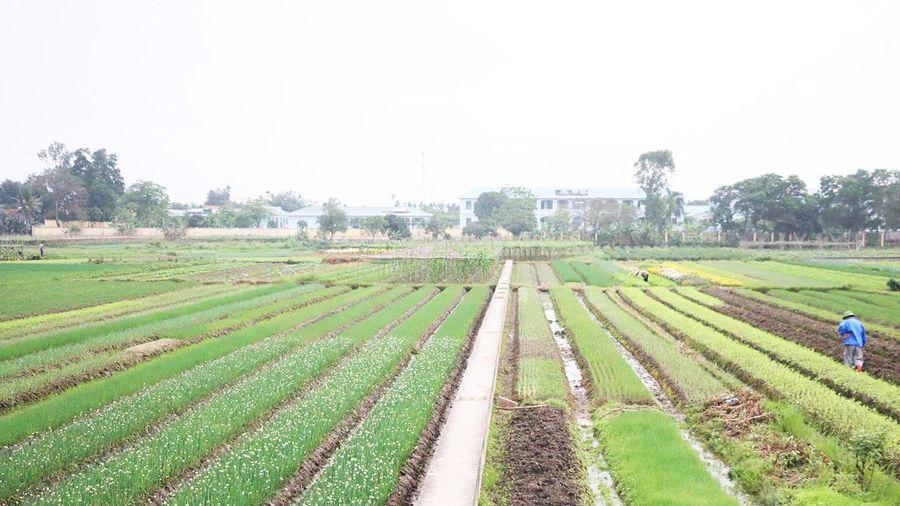 Tăng cường quản lý, sử dụng hợp lý thuốc bảo vệ thực vật